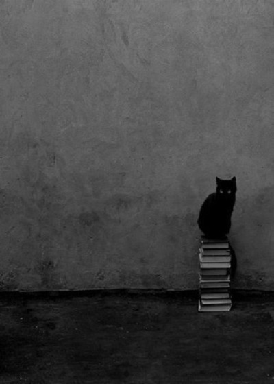 caru-gomez:  -BLACK CAT, WHITE BOOKS-