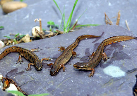 Somebody just did a post asking for newts. Hey, whatever makes you happy!