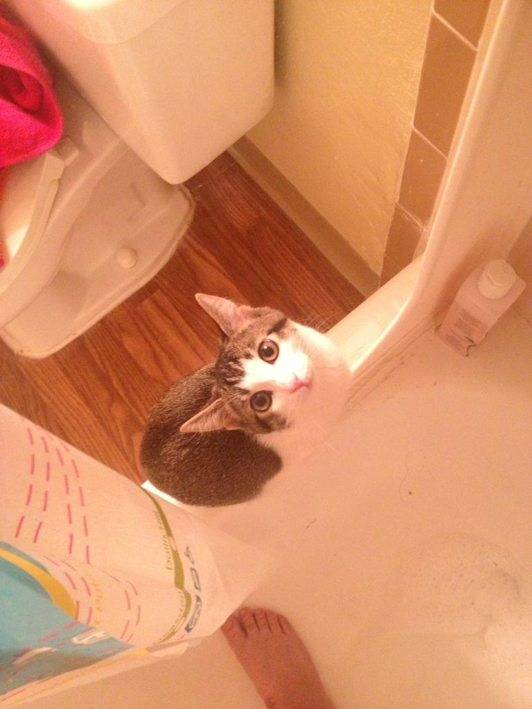 """I watch you take a shower because I love you!"" Photo via cats amazing"