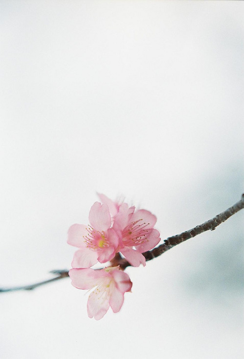 manolescent:  blooming