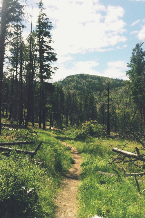 man-and-camera:  Wild Horse Canyon Trail ➾ Luke Gram