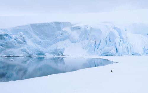 winter snow antarctica frozen landscape uncropped nature penguin reflection blue up h