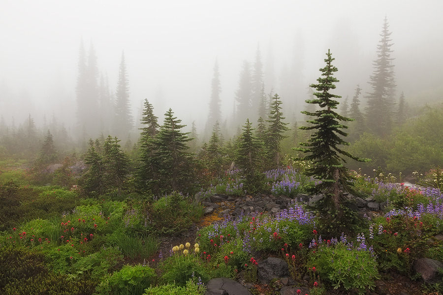 woodendreams:  (by Sarah Marino)