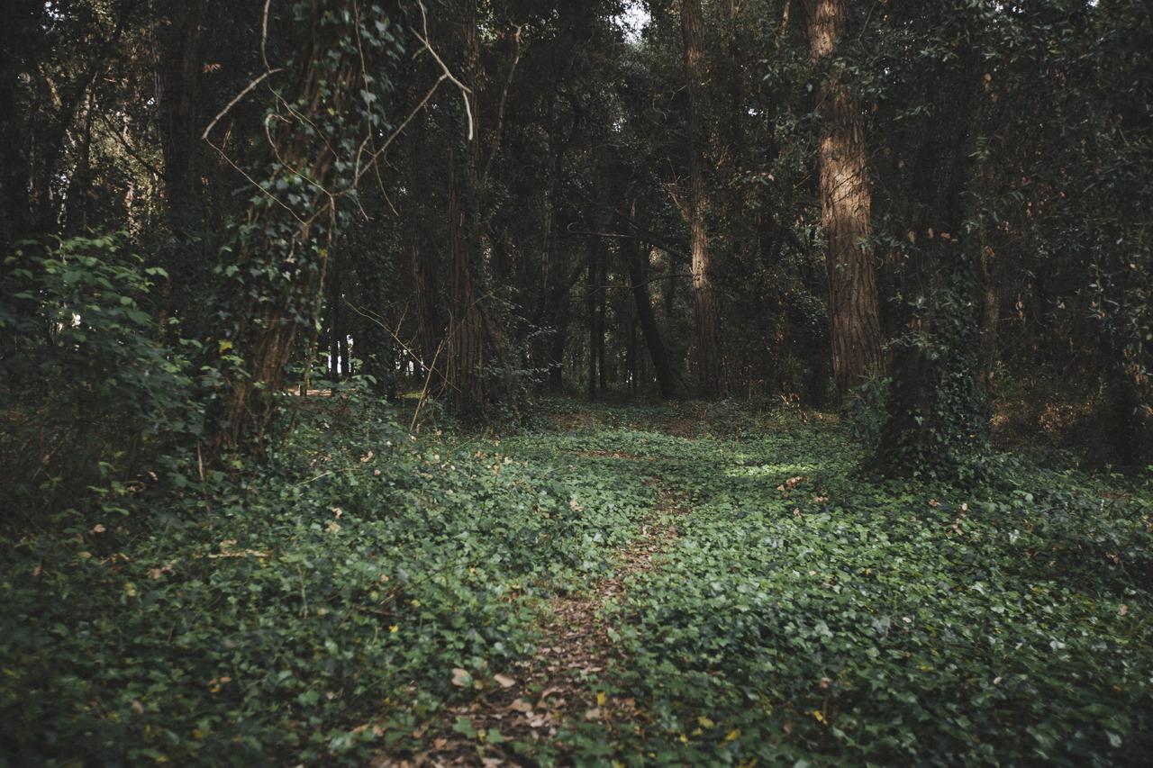 Http Rebloggy Com Post Photoset Popular Landscape Nature Forest Hiking Artists On Tumblr Tuscany Photog 82487370729