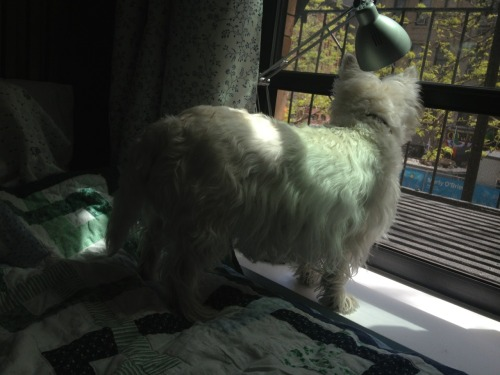 Diffie finally got brave enough to put her paws on the windowsill, even though it means standing over the big scary gap between the bed and the wall.