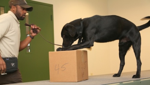 U.S. trains dogs to sniff out wildlife traffickers The first graduating class of 'wildlife detector dogs' will soon be stationed at ports around the U.S., part of a growing effort to stem the illegal trade of flora and fauna.
