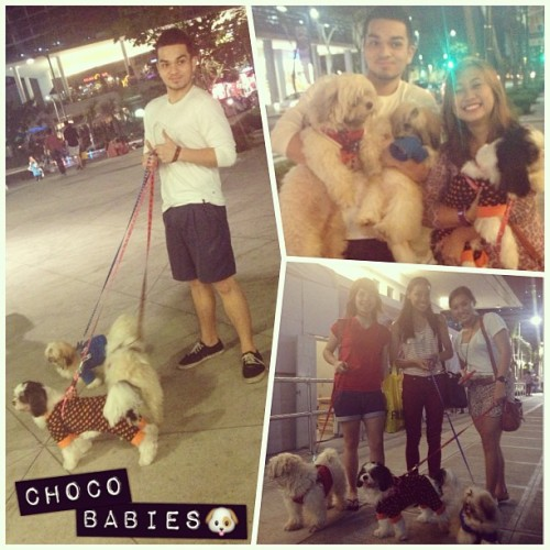 Oh the choco family! 🐶 #dogparty @gegonz @princessyapp @thelittlethinker @alyssamrose