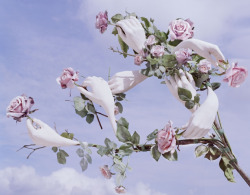 gemmalard: ph: Tim Walker I've dreamt of this tree before
