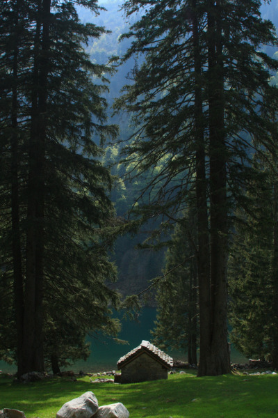 woodlandsouls:  Huge trees at Cama lake (by supersky77)