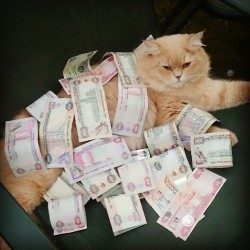 #Brrnaw #Brown #Cat #Myaw #Cute #7lw #Money #Cash #AED #1000 #500 #100 #Good #Weather