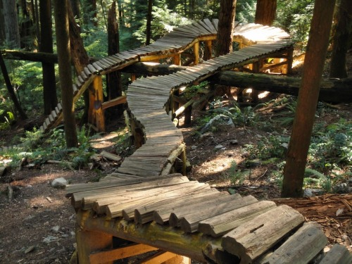 mygoonplatoon:  horsthimself:  solid construction!  i dream of wood like this