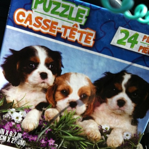 Things I buy at the #dollarstore #thingsiblowmymoneyon #cavaliers #puppies #finalsweek #therapy