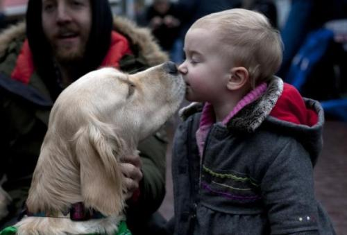 freakinfrack:  Comfort Dog brought to Newtown