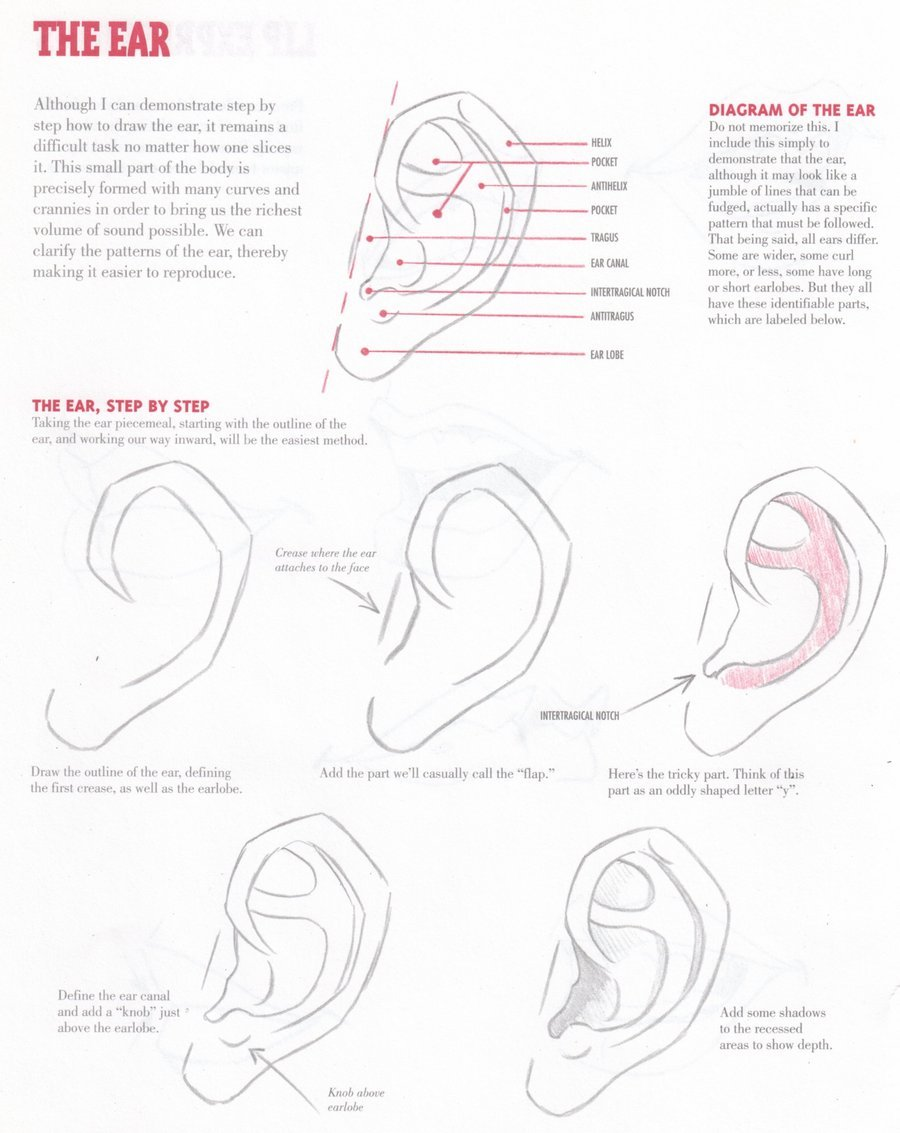 fyeahartisthelp:  EAR TUTORIAL by ~Christopher-Hart