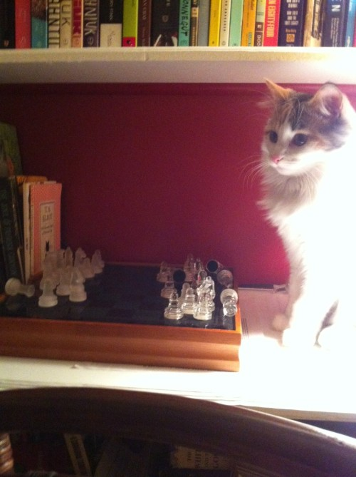 get out of there cat. nobody wants to play chess with you. you always cheat anyway.