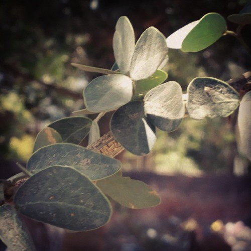 Natural Beauty #natural #nature #life #tree #bokeh #closeup #peace #leaves
