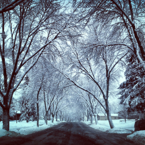 speakhersexxx:  Down the street from work (by the airport) snowy canopy! (: