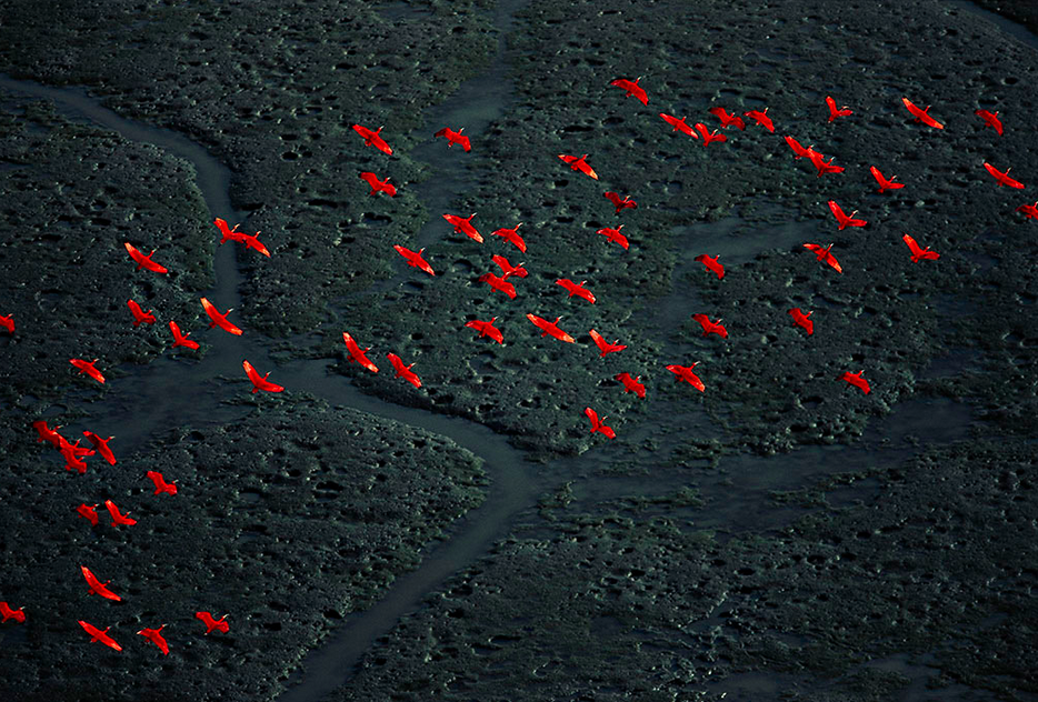 photojojo:  Yann Arthus-Bertrand travels across the globe capturing stunning landscape photos. Her website allows you to browse through the hundreds of countries she's visited, each with its own gallery. Yann's Aerial Photos from Around the World via Kateoplis