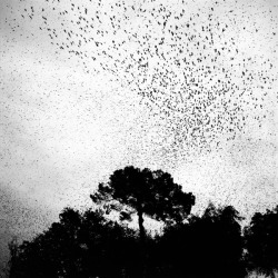 mpdrolet:   From Starlings Paolo Patrizi