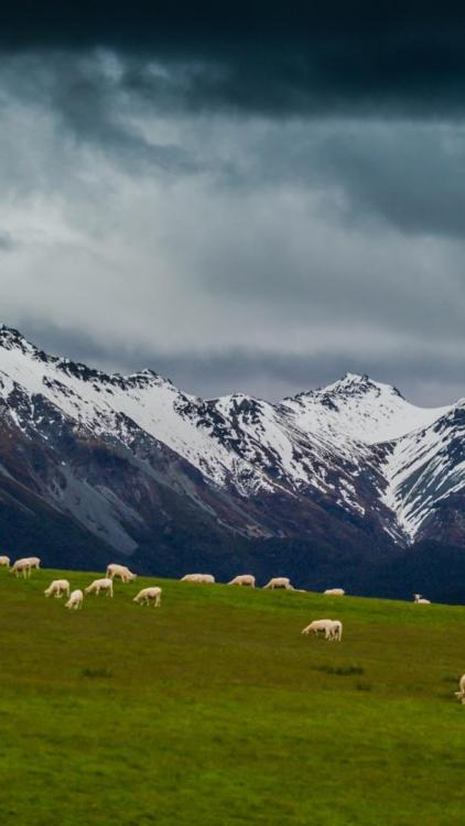 Sheep On Mountain Pasture GalaxyS4 Wallpaper