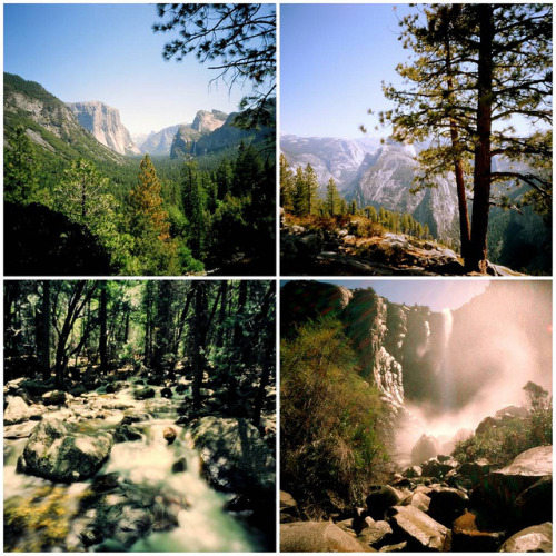 Pinhole: Yosemite Polytych on Flickr.Zero Image 69, F235, Kodak Portra Clockwise from top left: Yosemite Valley tunnel view; Half Dome from Glacier Point; near Bridal Veil Falls; Bridal Veil Falls