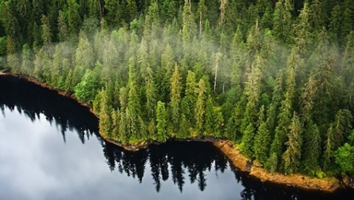 Forests flee, dump CO2 as climate warms An array of ecosystems will relocate due to global warming, but new research suggests the northward flight of boreal forests could be especially harmful.