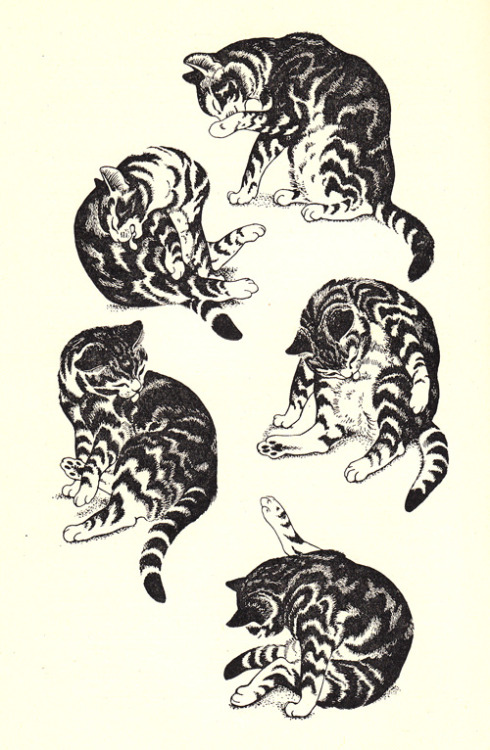 explore-blog shares:  The best mid-century cat stories, illustrated by Dame Eileen Mayo.  Happy Caturday!