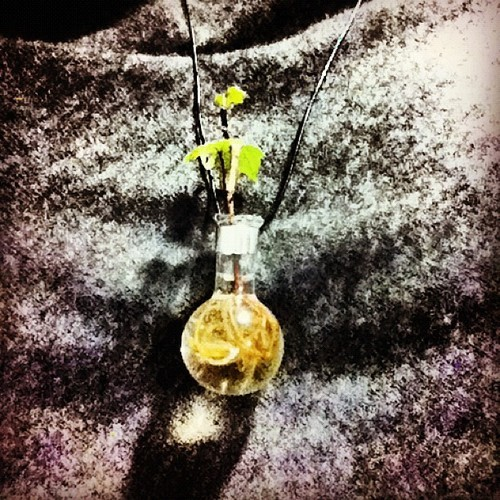 Mi más hermosa joya. 💚🌿💚 #jewelry #nature #knowingtheworldthroughnature #necklace #plantgreen #bubble #beautiful #memyselfandi #design #mexicandesign #bäum #sistemadeobjetos #cosette