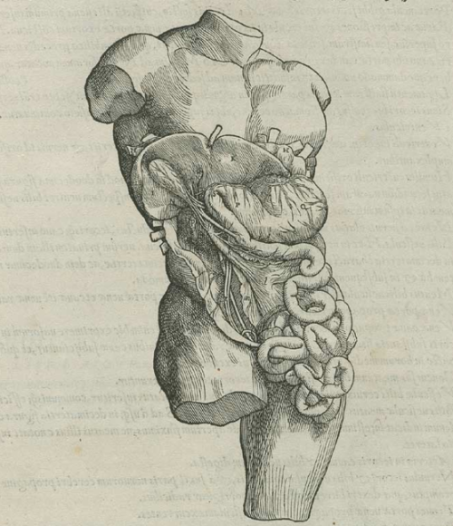 by Andreas Vesalius