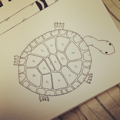 #Drawing a #turtle   #sketch #pen #animal #illustration