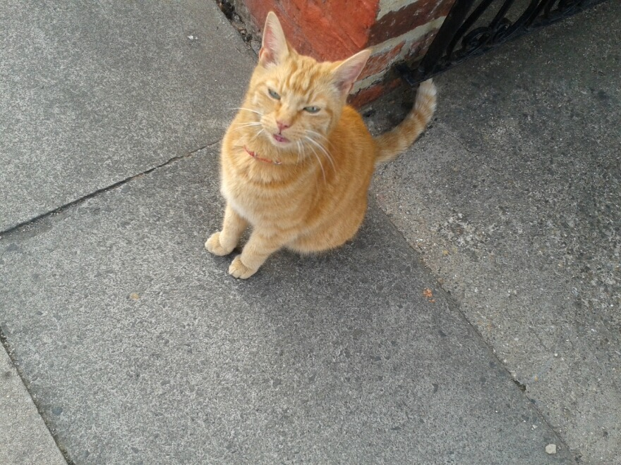 This is the neighbourhood cat who keeps coming into my house. He's so soft.