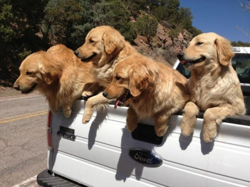 hellogiggles:  DOGGIE BANDITS MAKE CLEAN GETAWAY by The Fluffington Post  http://bit.ly/15rdNow  The cure all to a bad day. I could use a truck of this sort right now.