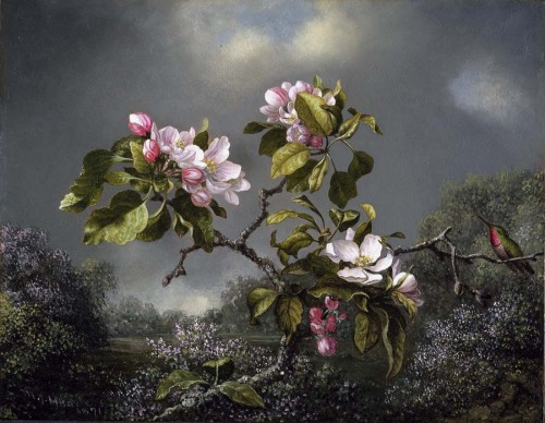 aleyma:  Martin Johnson Heade, Apple Blossoms and Hummingbird, 1871 (source).