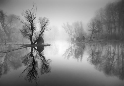 rcruzniemiec:  Through the Misty Air Adam Dobrovits