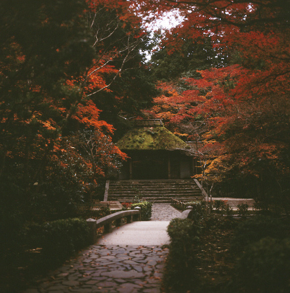 dreams-of-japan:  法然院 by yocca on Flickr.  Two tails
