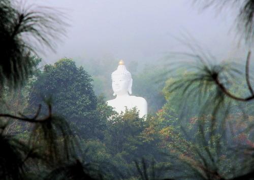 kelledia:Forest Buddha.