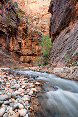 Zion Narrows by Ray Palmer Photography on Flickr.