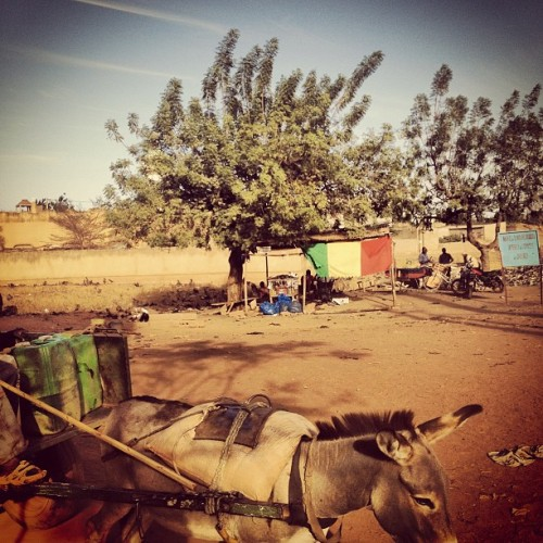 On the outskirts of Bamako, the Malian flag shades a tea shop in the distance, a donkey passes nearby. photo by @glennaordon in Mali. #donkey #transport #flag #mali #bamako