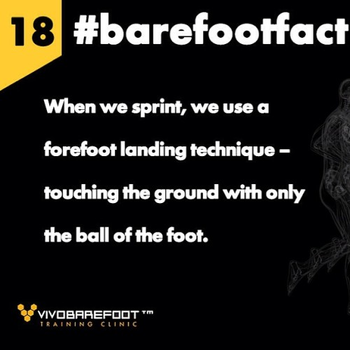 #barefootfact 18 Go mo, go When we sprint, we use a forefoot landing technique – touching the ground with only the ball of the foot. http://www.vivobarefoot.com/barefoot-facts