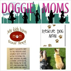Now you know I can't forget about my fellow canine and feline mommies out there..there is nothing like a doggy's love. I didn't know what I was getting into with this little guy but he has been such a joy to my life. Happy momma's day to those with 4 legged babies! #dogs #chichilove #cali #rescue