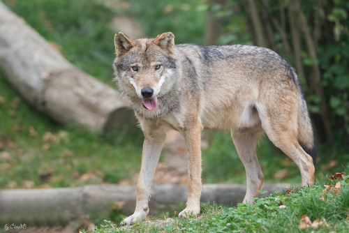 elegantwolves:  byClaudiB.