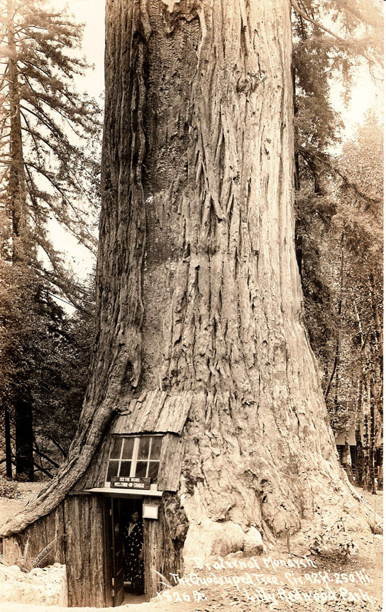 STRANGE 'TREE' HOUSES - REDWOOD TREES - SEQUOIA'S