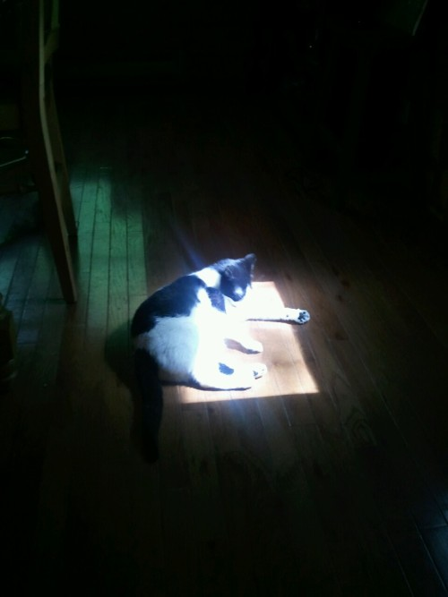 Good thing there's a Tony sized square of sunlight here.