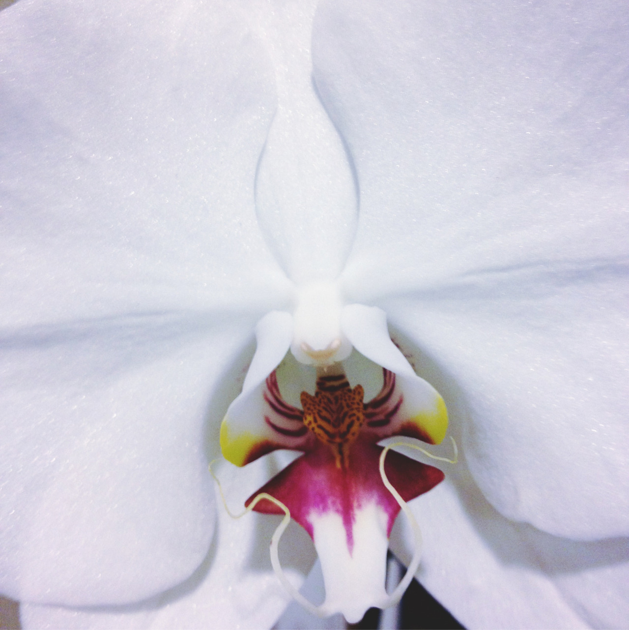 the-fluoro:  orchids are perf