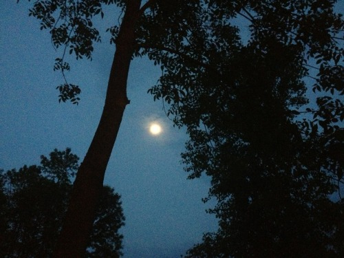 Moonlight last night. Was beautiful and very serene laying in the hammock looking up at it.