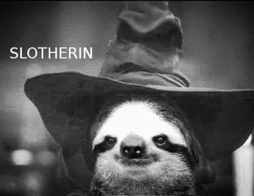 so-many-sloths:  the ultimate tumblr ship: Harry Slother!! follow for sloth humor