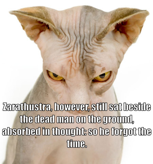 nietzschecats:  Thus Spoke Zarathustra 230/3112