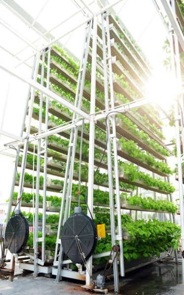Vertical Farming Is Key to the Smart Cities of the Future | STATETECH Smart cities could look very different from today's urban centers. Streetlights could be communicating with bus stops, and subway trains could be solar powered. Population growth will force local government leaders to rethink more than just transportation and housing. As the population increases, the real estate needed to grow the food we eat will become increasingly scarce. Some experts have suggested that a new agricultural approach called vertical farming, also known as urban farming, could solve this problem. In a model that is already being tested in Singapore, crops are grown indoors in tall buildings. The benefits are extensive, the technology is powerful and the results are delicious.
