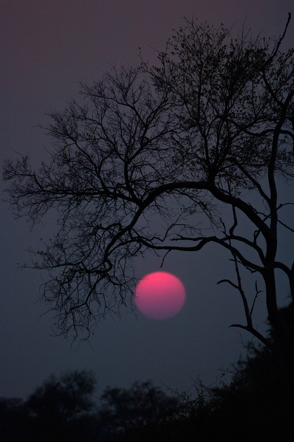 "hotbluelight:  ""Full Pink Moon – April: This name came from the herb moss pink, or wild ground phlox, which is one of the earliest widespread flowers of the spring. Other names for this month's celestial body include the Full Sprouting Grass Moon, the Egg Moon, and among coastal tribes the Full Fish Moon, because this was the time that the shad swam upstream to spawn.""  -The Farmers' Almanac  A glorious full moon rises this evening at 8:05 p.m EDT. April 25, 2013."