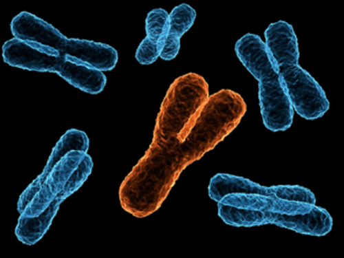 laughingsquid:  Geneticists Discover Y Chromosome That Predates Mankind